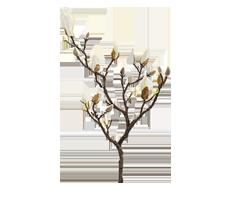 zijdenbloemen-planten